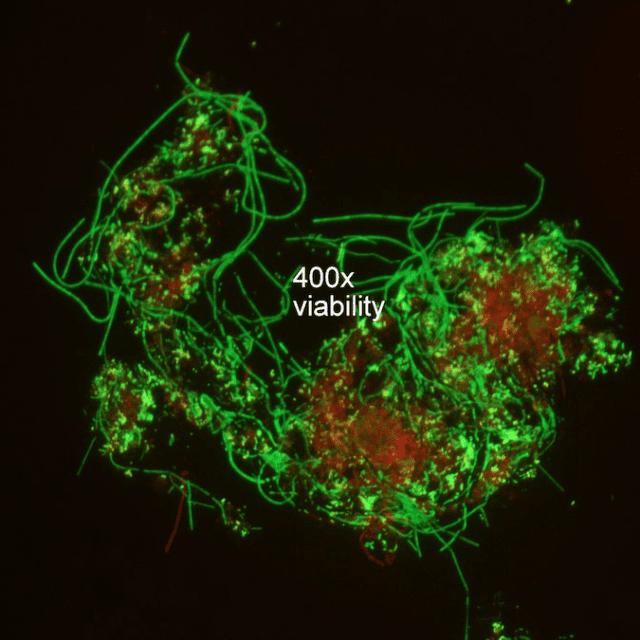 Microbe 400 times viability